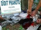 Didit Pranoto