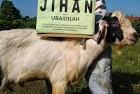 Jihan1